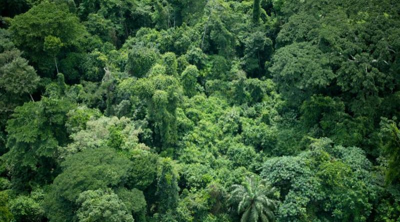 Kongo central : Quelques problèmes environnementaux observés dans la ville de Matadi