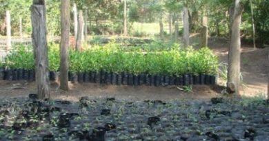 Les agronomes du Nord-Kivu appelés à privilégier l'agroforesterie